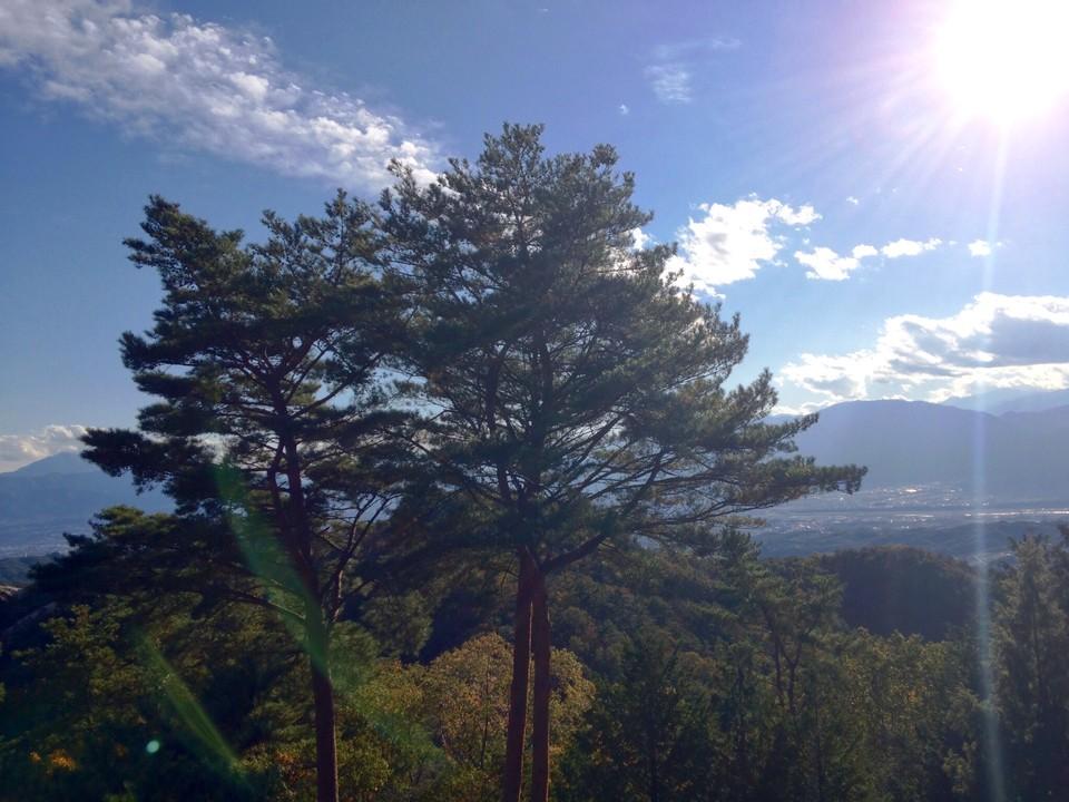 [Вид с вершины — деревья]